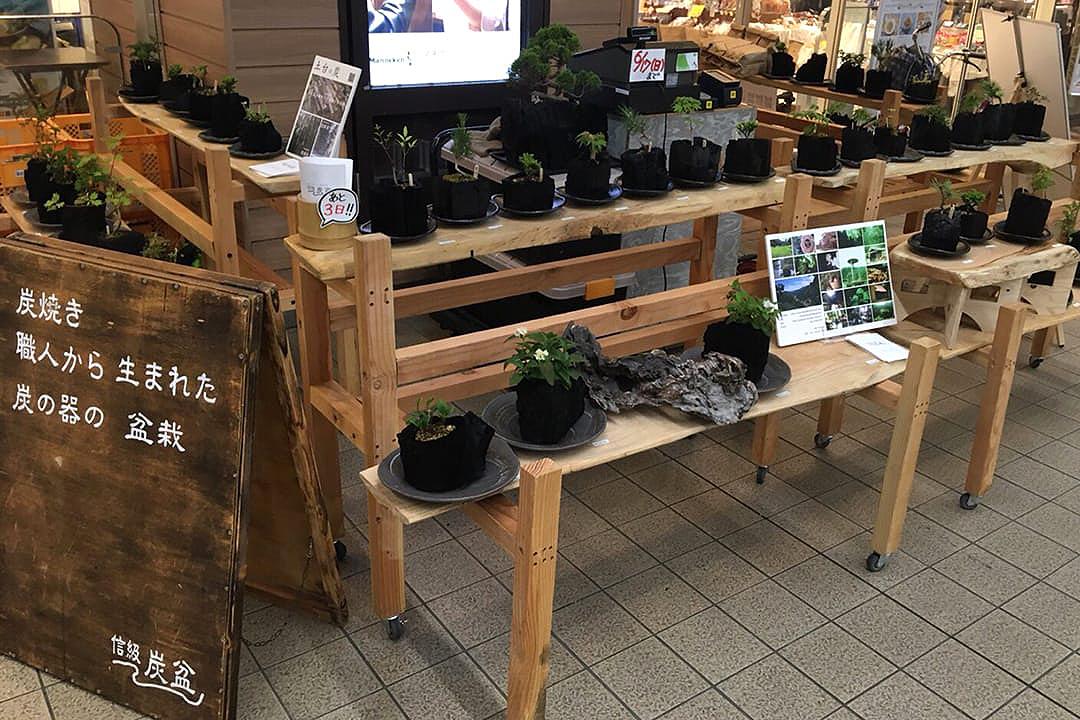 盆栽 BONSAIのイメージ