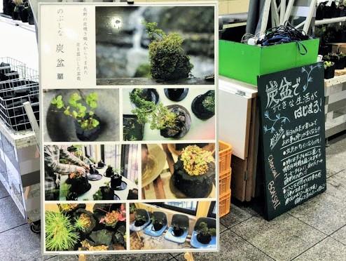 炭盆栽のイメージ